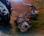 the-leopard – Rik Rawling2013
